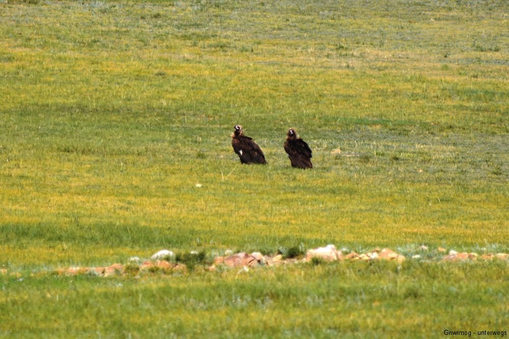 160706-14-unterwegs-geier