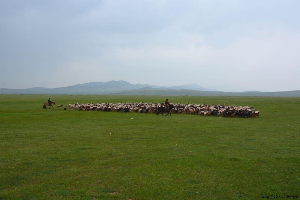 160706-175-mongol-els