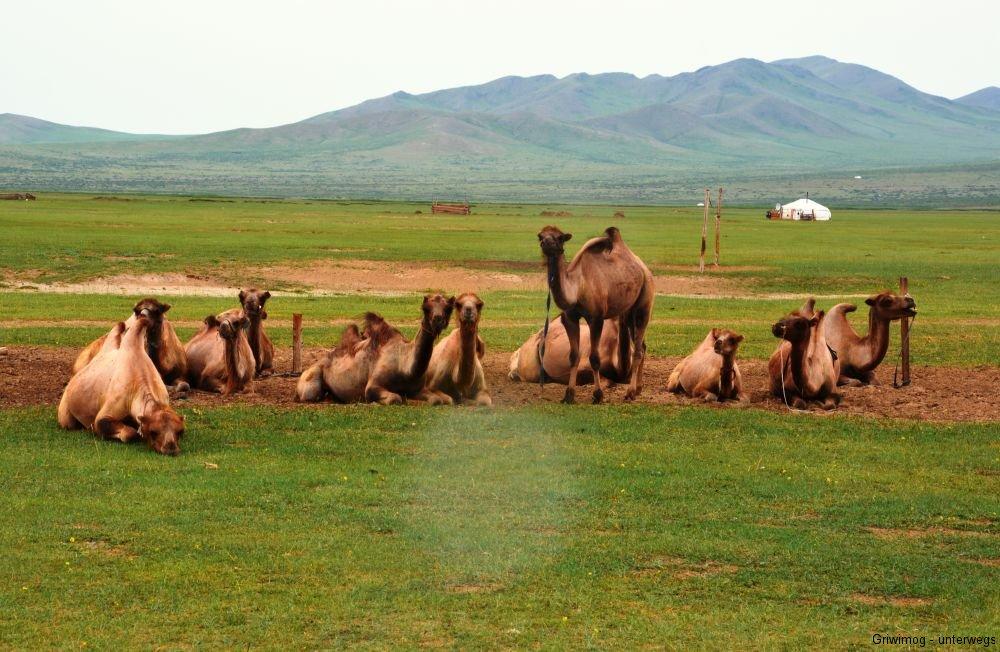 160706-74-mongol-els